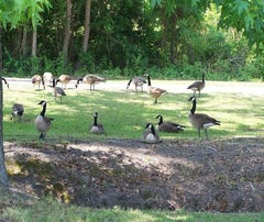 """The official start of """"hunting season"""" opens with a 30-day early goose waterfowl season the month of September."""