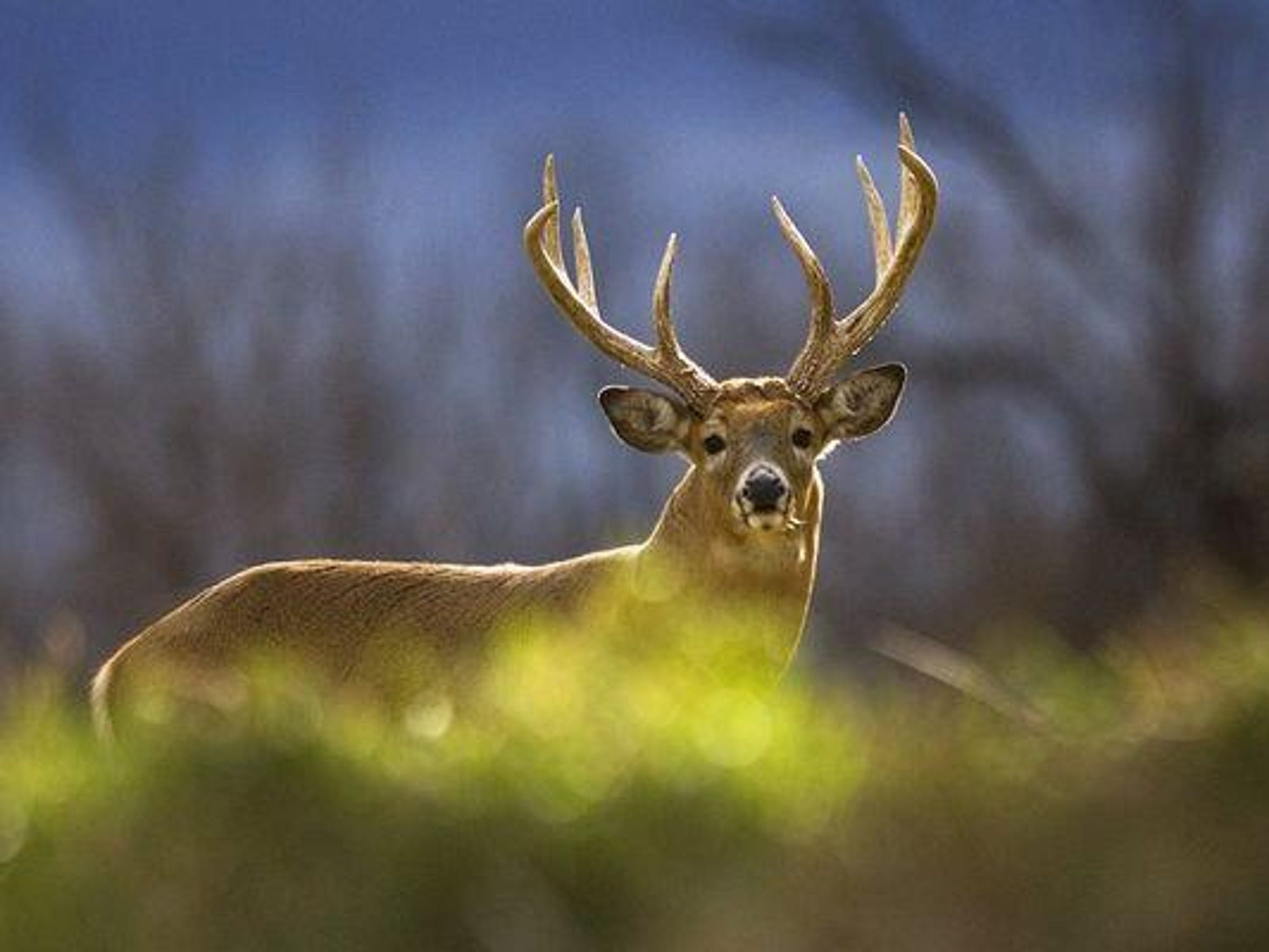 Bow hunters will be looking for big bucks with the opening of archery season on Monday in Michigan.