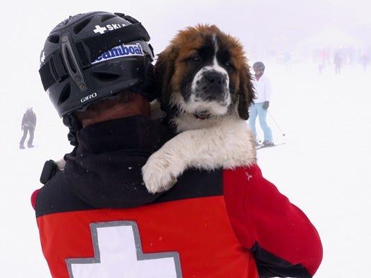 636264250803353815-Powder-the-ski-dog-courtesy-Steamboat-Ski-Resort.mov.00-00-36-22.Still010-1490822530197-9069644-ver1.0.jpg
