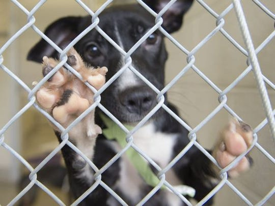 The Humane Society of Vero Beach and Indian River County has received a $15,540 Florida Animal Friend grant to be used to spay and neuter 400 cats and 150 dogs belonging to economically insecure residents living in Fellsmere, Gifford, Wabasso and South County for $1 per animal. The program is funded through Aug. 31.