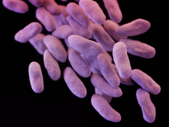 This illustration released by the CDC depicts a 3-D computer-generated image of a group of CRE bacteria.