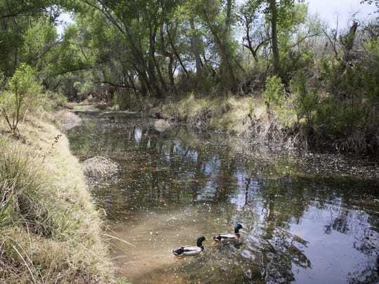 The San Pedro River is the Southwest's last undammed