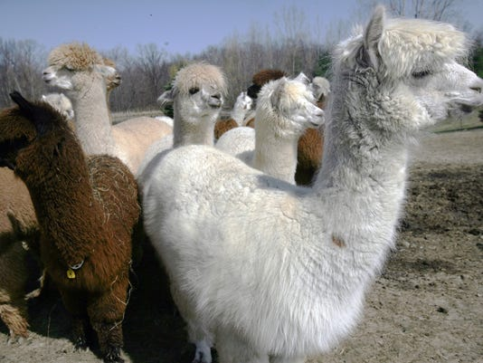 636344526942744356-Alpaca-033007-group-wa.jpg