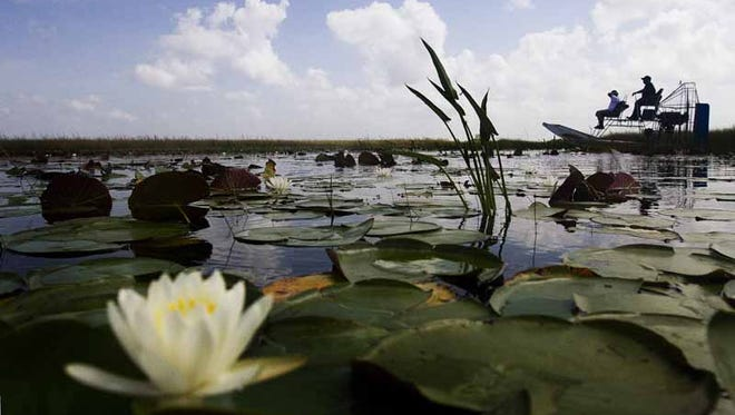 A water lilly blooms on Miccosukee tribal lands in the River of Grass. Some tribal members say water levels are too high due to discharges from Lake Okeechobee and that the water needs to be cleaner before being sent to reservation lands. For thousands of years canoes were used to travel across South Florida.