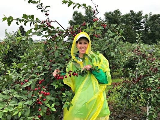 Sour-Cherries---picking-adventure.jpg