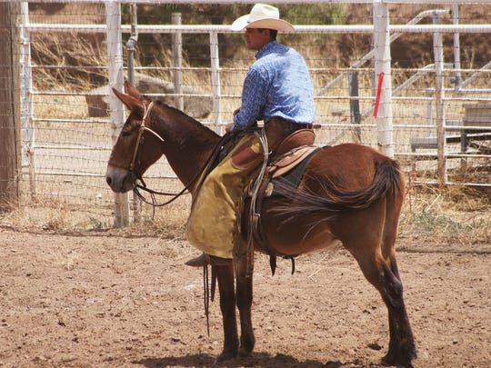"""I'm always a little cautious about asking for burro, donkey or as most people will say, """"jackass"""" stories. I always try to clarify that I'm speaking of the four-legged variety."""