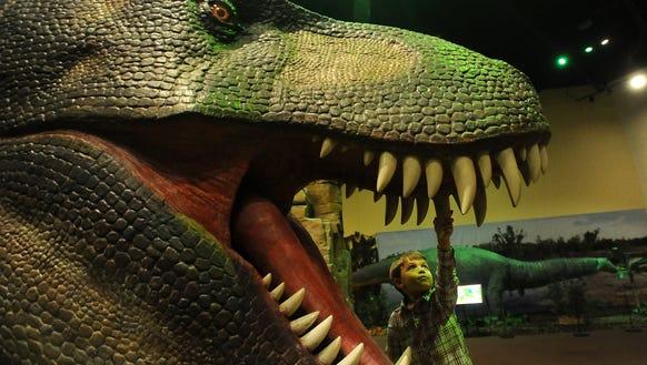 Alaric Rand, 3, checks the teeth of a Tyrannosaurus