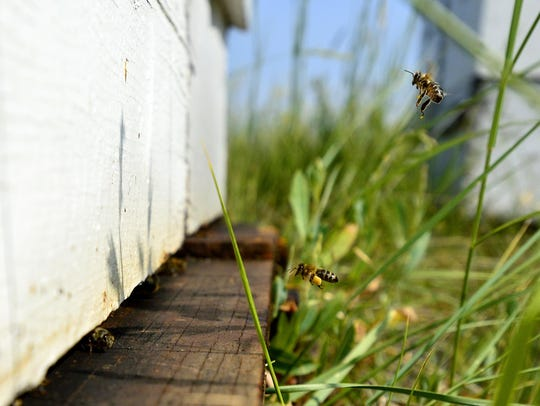 Smoot Honey Co. honey bees return to their hive after