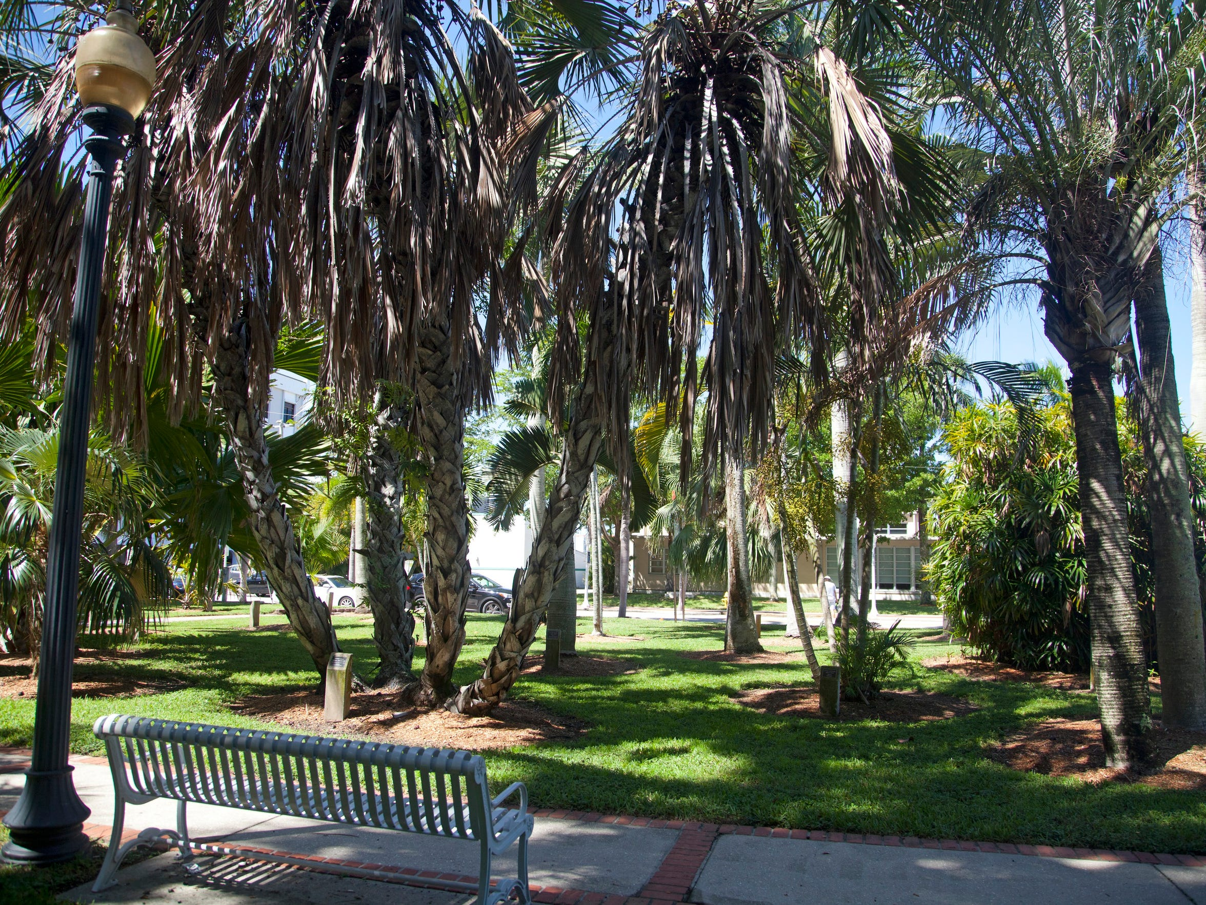 The palm park at Lee Street and Edwards would grow
