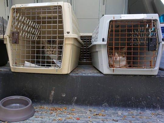 Two cats from The Humane Society of Somerset County wait to be carried inside to the Spay Spa and Neuter Nook in Davidsonville, Maryland.