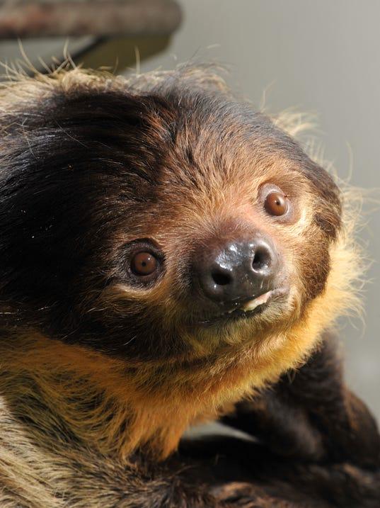 Sloth_1299.jpg