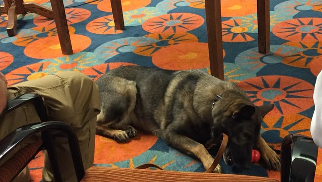 Lara, a 5-year-old Dutch Shepard dog, came with her handler, Chris Campbell to Tuesday's commissioners court meeting.