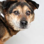 Adoptable pets for Dec. 15-21