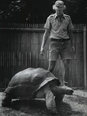 Dan Fritsch, an attendant at the Milwaukee County Zoo's Children's Zoo, checks up on Dorian, the larger of the Milwaukee zoo's two Aldabra tortoises. Dorian when standing, is slightly less than 3 feet tall and weighs about 400 pounds.