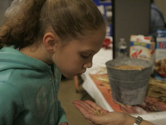 Tiffany Boyer, 6, learns how to separate the wheat