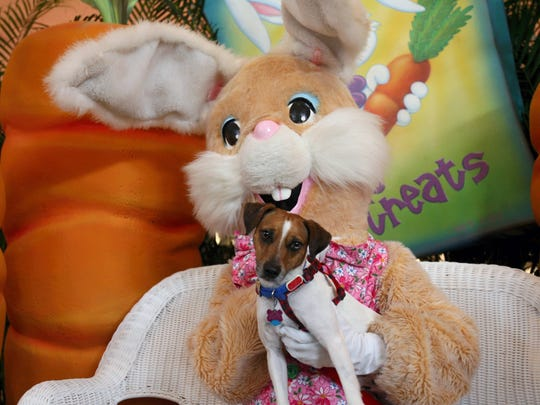 The Easter Bunny will take photos with dogs and cats from 5-7 p.m. Tuesday, April 11, at La Palmera mall, 5488 South Padre Island Drive. Pets must be leashed remain on a leash or in a carrier. Information: 361-991-3655.