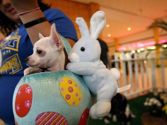 La Palmera Mall, 5488 S. Padre Island Drive, presents Pet Night with the Easter Bunny from 5-8 p.m. Tuesday, March 20 through Friday, March 23 in the center court.