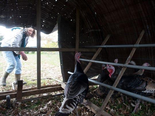 Verlinda Waters of River Ridge Farms checks in on the turkeys she is raising on Monday, November 13, 2017.