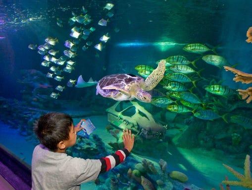 60. Sea Life Arizona | Inside Arizona Mills is an aquarium