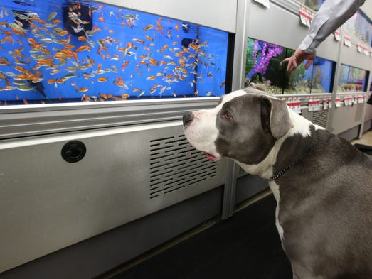 Rockland gets a new superstore for pet lovers for Fish and pet store