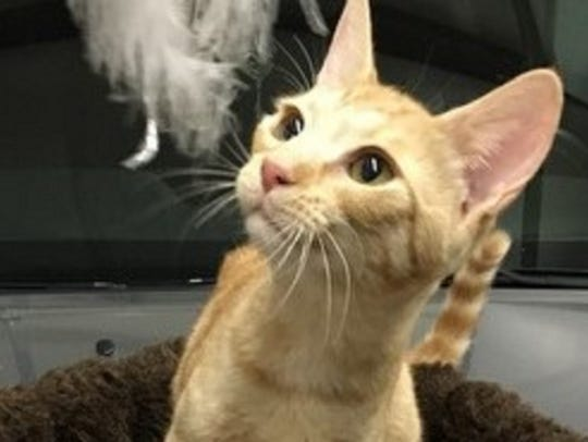 Buttercup is a shy, curious and playful 9-month-old