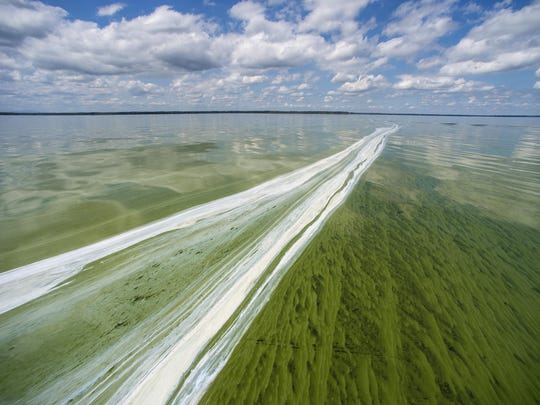A cyanobacteria bloom on Missisquoi Bay near Highgate Springs on Wednesday, August 26, 2015.