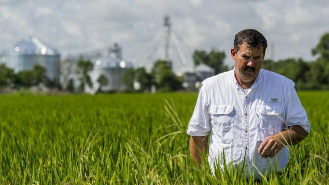 Rice farmer Richard Fontenot believes Cuba has the potential to buy half of Louisiana's crop.