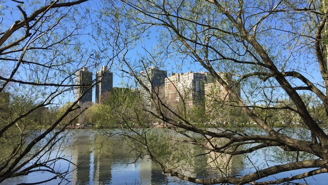 Chicago's Lincoln Park neighborhood is a tourist attraction in its own. Spring trees bud at North Pond in Lincoln Park.