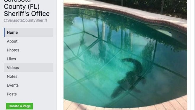 A Florida family found an alligator in their pool.