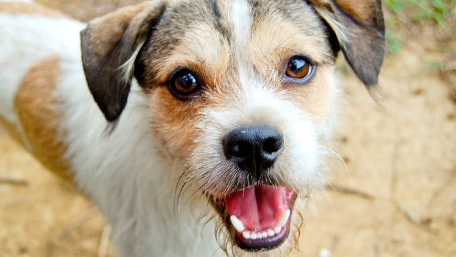 Photo of close-up dog head, its so cute and smiling to you! :)