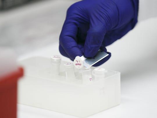 Forensic scientist Jennifer Buttler puts a cutting