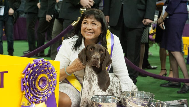 CJ, a German Short Haired Pointer, wins Best in Show at the 140th annual Westminster Kennel Club dog show at Madison Square Garden on Feb. 16, 2016 in New York.