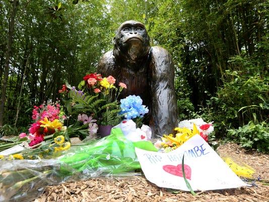 May 31, 2016: Cincinnati Zoo and Botanical Garden, Harambe, Gorillas, Liz Dufour