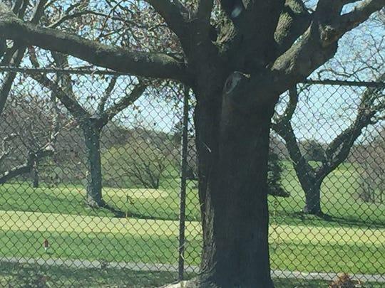Toms River's Bey Lea Golf Course.
