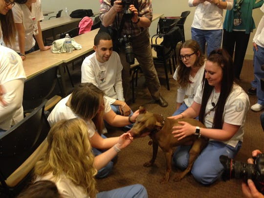 Therapy dog Aladdin licks students from Our Lady of Lourdes School of Nursing on Thursday as he pays them a visit to help relieve stress.