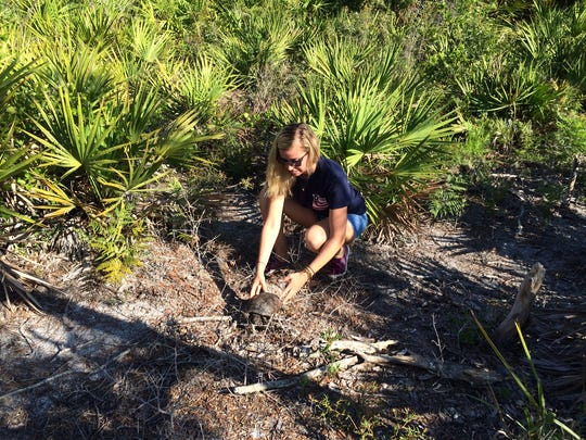 Von Arx Wildlife Hospital Conservation Associate Brenna Romig releases a gopher tortoise at Collier's Reserve. The tortoise, rescued before being injured, was found on Immokalee Road near Collier's Reserve.