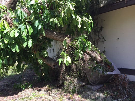 A massive oak tree that fell on a Rockledge home impaled an air conditioner at the residence.