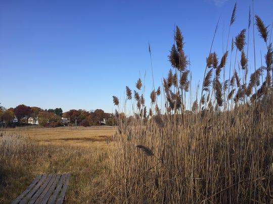 Mamaroneck's 35-acre Otter Creek Preserve.