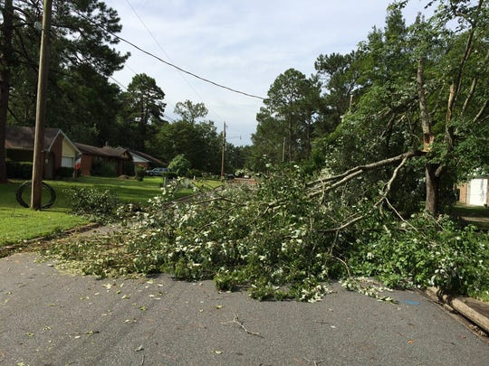 Summer storms keep contractors busy - consider scheduling tree maintenance during the winter months.