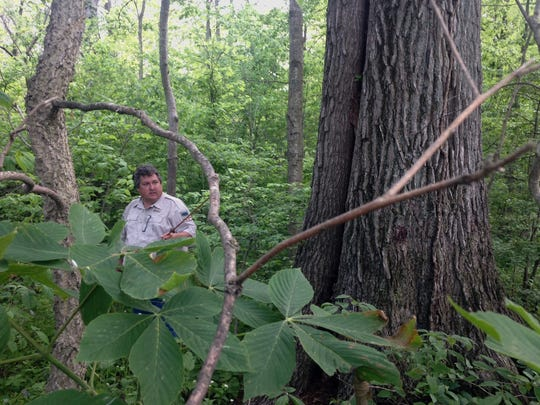 District forester Brad Rody discusses a tree in the Herbert Davis Forestry Farm.