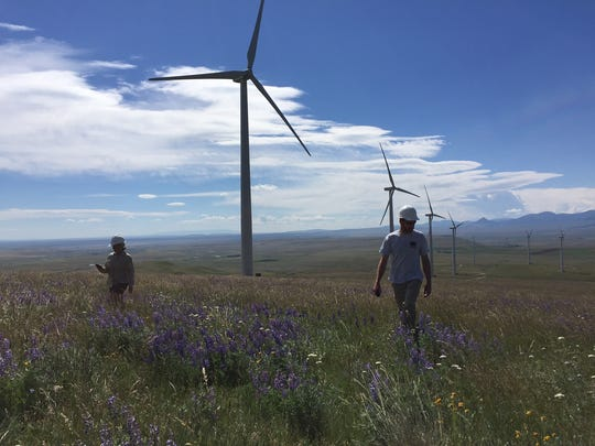 Camille Waters and Chuck Taylor, Montana Fish, Wildlife and Parks science technicians, search a square grid around a wind turbine looking for bird or bat carcasses. Preliminary results show the wind farm is having a bigger impact on bats than birds.