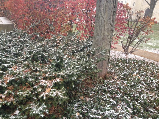636481589501200335-Snowy-bushes.JPG