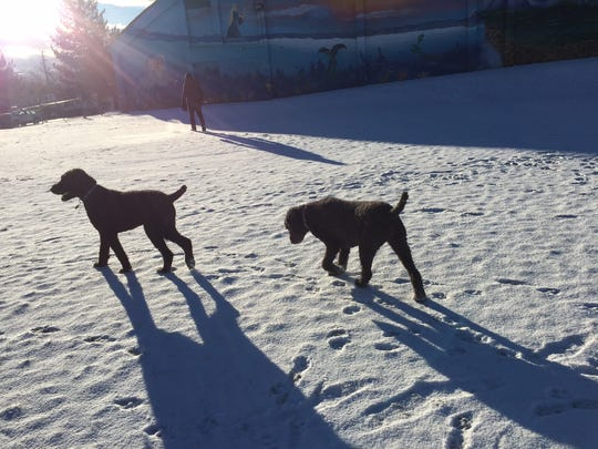 Dogs romp at Plumas Park in Reno on Wednesday, Dec. 20, 2017 after a fast-moving storm left snow on the ground.