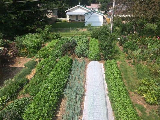 636645828609552570-Millet-Seed-Garden.jpg
