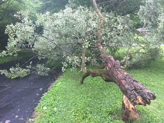Scattered trees and limbs were knocked down Tuesday,