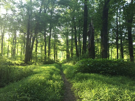 Shady trails like this one in Union County's Watchung