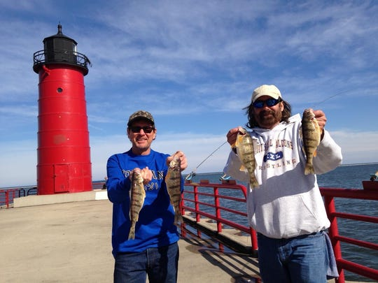 Yellow perch catches like these in 2015 in Milwaukee are becoming increasingly rare in the Wisconsin waters of Lake Michigan.