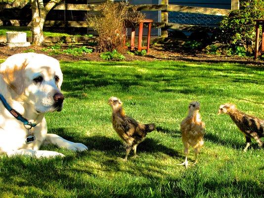 Gardening-Pet Gardens (2)