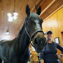 Airbnb for horses? New online platform helps equestrians rent stalls