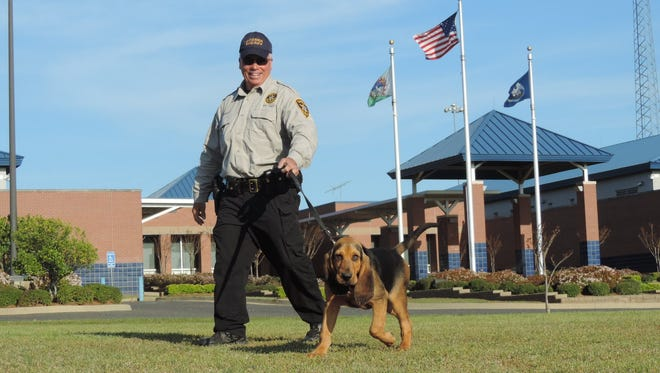 Deputy Casey Fradella walks Beau, the newest member of the Bossier Sheriff's Office.  Beau, acquired from Angola, will join Ace, a 6-year-old bloodhound, and will train to track human scent.